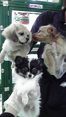 広島WANのブログ-2009120818520000.jpg