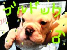 広島WANのブログ-DVC00035.jpg