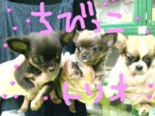 広島WANのブログ-DVC00040.JPG