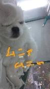 広島WANのブログ-DVC00374.JPG