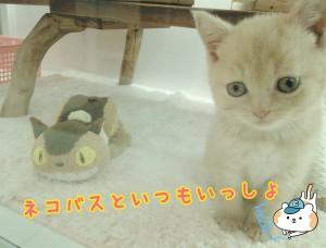ブリ 猫バス