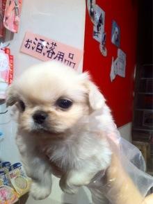 ikebukuro1wanさんのブログ-image.jpeg