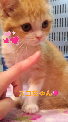 PET SUPER 1WAN 池袋店さんのブログ-120528_1730~010001.jpg