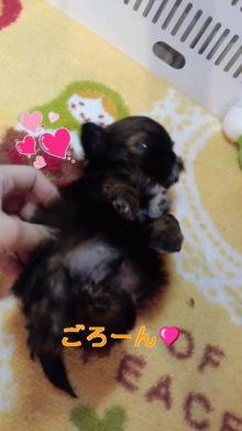 PET SUPER 1WAN 池袋店さんのブログ-120616_1502~010001.jpg