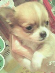 PET SUPER 1WAN 池袋店さんのブログ-201206212309000.jpg