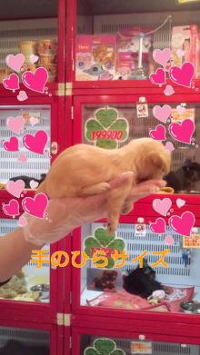 PET SUPER 1WAN 池袋店さんのブログ-120630_1511~010001.jpg