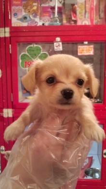 PET SUPER 1WAN 池袋店さんのブログ-120630_1511~02.jpg