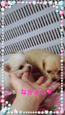 PET SUPER 1WAN 池袋店さんのブログ-120630_1513~010001.jpg