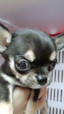 PET SUPER 1WAN 池袋店さんのブログ-120728_2132~02.jpg