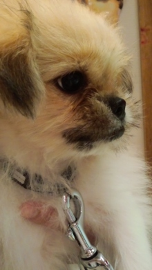 PET SUPER 1WAN 池袋店さんのブログ-120811_1517~01.jpg