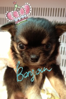 PET SUPER 1WAN 池袋店さんのブログ-image.jpeg