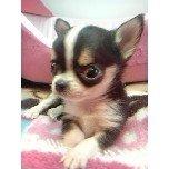 PET SUPER 1WAN 池袋店さんのブログ-121209_174358_ed.jpg