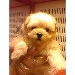 PET SUPER 1WAN 池袋店さんのブログ-121209_175312_ed.jpg