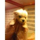 PET SUPER 1WAN 池袋店さんのブログ-121209_175414_ed.jpg