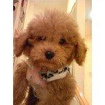 PET SUPER 1WAN 池袋店さんのブログ-121210_192344_ed.jpg