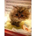 PET SUPER 1WAN 池袋店さんのブログ-121217_100955_ed.jpg