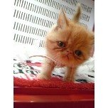 PET SUPER 1WAN 池袋店さんのブログ-121214_215739_11_ed.jpg