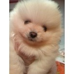 PET SUPER 1WAN 池袋店さんのブログ-121217_101058_ed.jpg