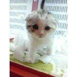 PET SUPER 1WAN 池袋店さんのブログ-121214_214855_34_ed.jpg