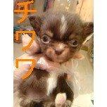 PET SUPER 1WAN 池袋店さんのブログ-121221_101248_ed_ed.jpg