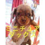 PET SUPER 1WAN 池袋店さんのブログ-121221_100701_ed_ed.jpg