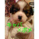 PET SUPER 1WAN 池袋店さんのブログ-121221_100842_ed_ed.jpg