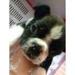 PET SUPER 1WAN 池袋店さんのブログ-121228_105515_ed.jpg