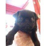 PET SUPER 1WAN 池袋店さんのブログ-121228_105715_ed.jpg