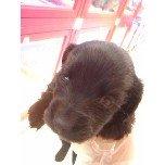 PET SUPER 1WAN 池袋店さんのブログ-121228_105956_ed.jpg