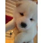 PET SUPER 1WAN 池袋店さんのブログ-121228_110635_ed.jpg