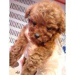 PET SUPER 1WAN 池袋店さんのブログ-121228_110831_ed.jpg