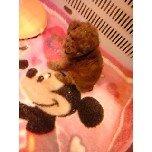 PET SUPER 1WAN 池袋店さんのブログ-121228_111058_ed.jpg