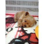 PET SUPER 1WAN 池袋店さんのブログ-121228_111410_ed.jpg