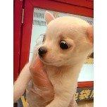 PET SUPER 1WAN 池袋店さんのブログ-121228_105136_ed.jpg