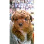 PET SUPER 1WAN 池袋店さんのブログ-121231_095900_ed.jpg