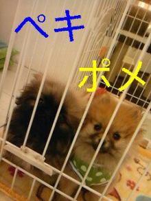 PET SUPER 1WAN 池袋店さんのブログ-130107_170544_ed_ed.jpg