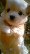 PET SUPER 1WAN 池袋店さんのブログ-130113_101932_ed.jpg