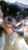 PET SUPER 1WAN 池袋店さんのブログ-130113_102102_ed.jpg