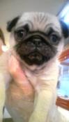 PET SUPER 1WAN 池袋店さんのブログ-130113_102454_ed.jpg