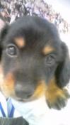 PET SUPER 1WAN 池袋店さんのブログ-130113_103043_ed.jpg