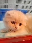 PET SUPER 1WAN 池袋店さんのブログ-130113_103300_ed.jpg