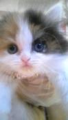 PET SUPER 1WAN 池袋店さんのブログ-130113_103708_ed.jpg