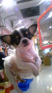 PET SUPER 1WAN 池袋店さんのブログ-130120_210727_ed.jpg