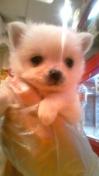 PET SUPER 1WAN 池袋店さんのブログ-130125_210947_ed.jpg
