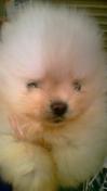 PET SUPER 1WAN 池袋店さんのブログ-130125_211241_ed.jpg