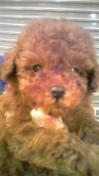 PET SUPER 1WAN 池袋店さんのブログ-130125_211355_ed.jpg