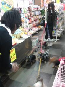 ペットスーパーWAN 岡山店-2009032115430000.jpg