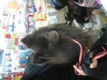 ペットスーパーWAN 岡山店-091129_1459581.jpg