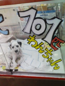 ペットスーパーWAN 岡山店-100421_2106~01.jpg
