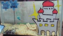 ペットスーパーWAN 岡山店-201005161957001.jpg